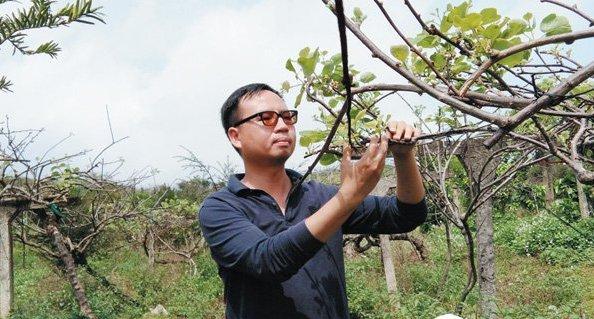 面对这样的局面,林国伟与妻子想尽办法,更换新果树和用好的有机化肥去图片