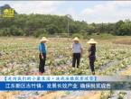 8月3日河源新聞聯播